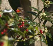 mypicturedlife - Birds In Garden