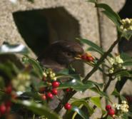 mypicturedlife - Birds In Garden thumbnail
