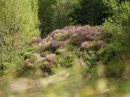 mypicturedlife - Ogden Water thumbnail