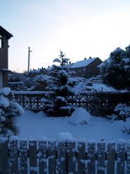 Snow January 06-01-2010