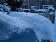 mypicturedlife - Snow January 06-01-2010