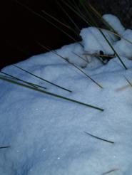 mypicturedlife - Snow January 06-01-2010 thumbnail
