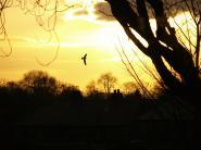 mypicturedlife - Sunset 1st-Feb-2012