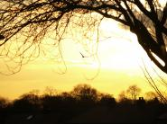 mypicturedlife - Sunset 1st-Feb-2012