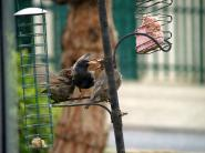 mypicturedlife - Wildlife in garden May thumbnail