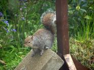 Wildlife in garden May