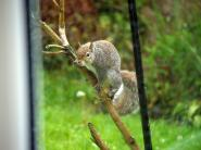 mypicturedlife - Wildlife in garden May
