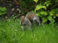 Wildlife in garden May